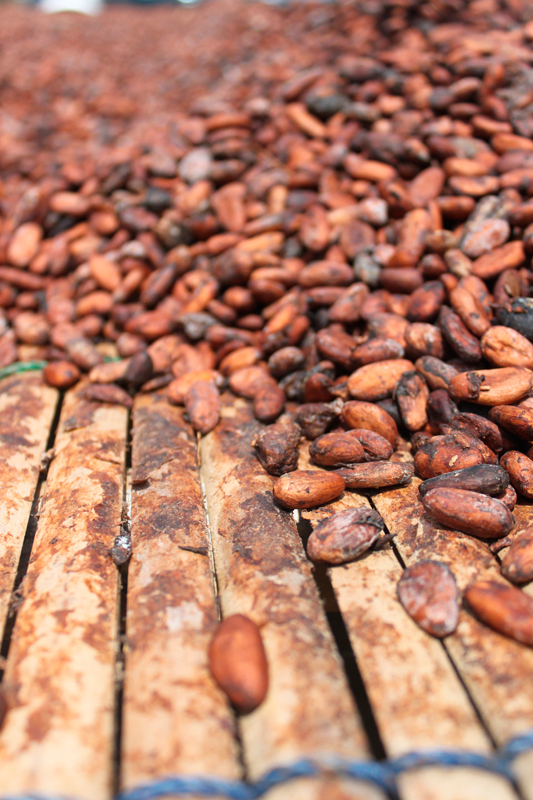 Early chocolate was made of ground and spiced cacao beans served as a beverage. It bears little resemblence to today's sweetened milk chocolate bars and candy. (credit: Courtesy of benketaro via flickr)