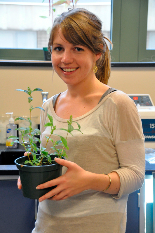 Biomedical engineering doctoral student Mary Beth Wilson is working on how to make amaranth, a prevalent weed in developing countries, edible. (credit: Alan Vangpat/Senior Photographer)