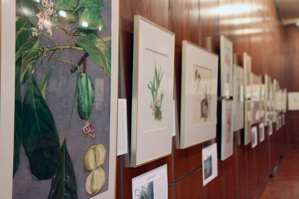 _Portraits of a Garden_ features a collection of hand-crafted botanical illustrations. (credit: Jonathan Carreon/Photo Editor)