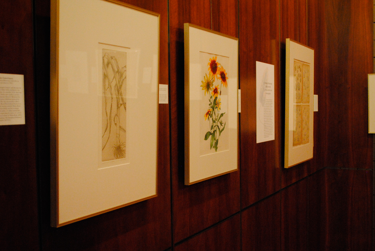 What We Collect: Recent Art Acquisitions 2007 - 2012 showcases intricate botanical illustrations. (credit: Haley Bryant/)