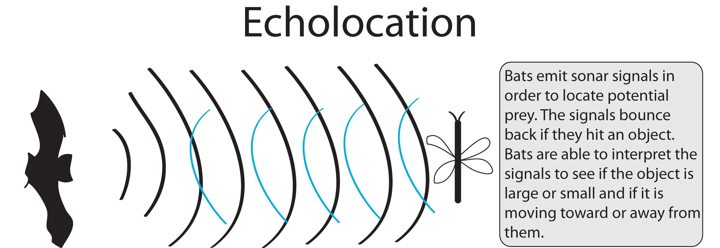 Echolocation allows dolphins, bats to navigate without sight - The ...