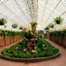 "Phipps Conservatory and Botanical Gardens' latest display is titled ""Orchid and Tropical Bonsai."""