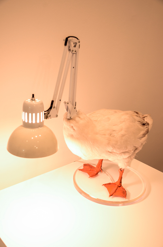 *Duck Lamp* fuses a taxidermy duck to a lamp, fitting the duck with a new head. (credit: Braden Kelner/Editor-in-Chief)