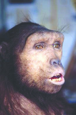 A reconstructed Sahelanthropus face. Sahelanthropus may have been the last common ancestor betweeen human beings and chimpanzees.  (credit: Courtesy of Élisabeth Daynès via Wikimedia Commons)