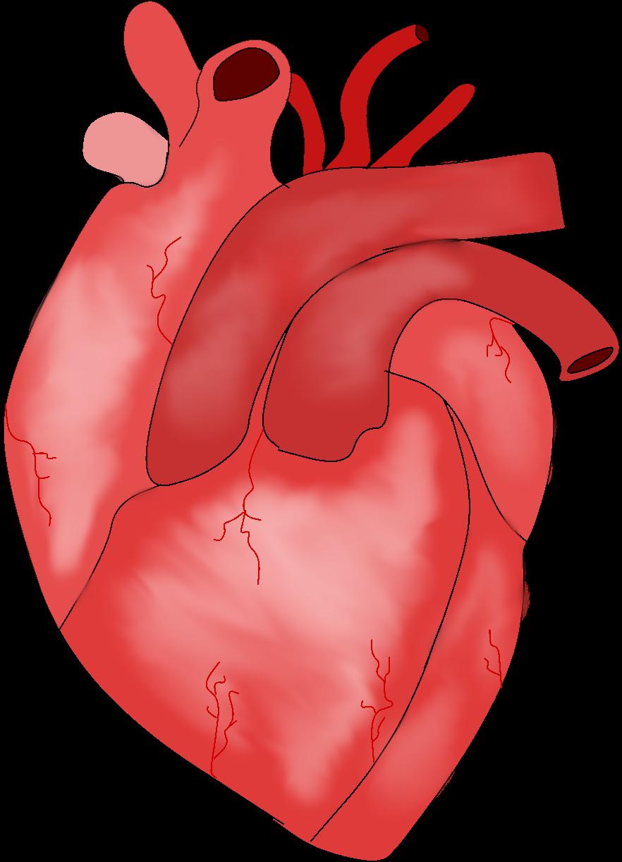 Heart.rebeccaenright